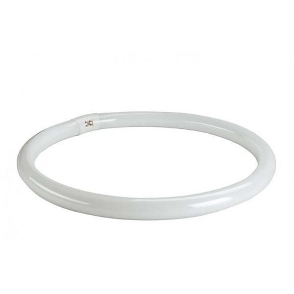 Ampoule G10q T8 ring éco de 40W