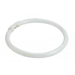 T5 ring tube fluorescent 40W 4000K